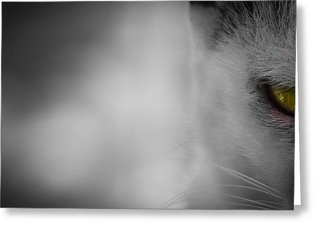 Photos Of Cats Greeting Cards - Hunger Greeting Card by Stephen Rodriques