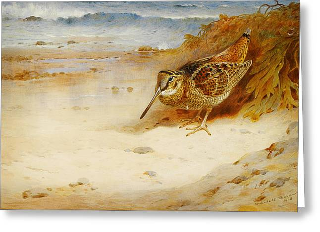 Sunset Scenes. Drawings Greeting Cards - Hungry and homeless Greeting Card by Archibald Thorburn