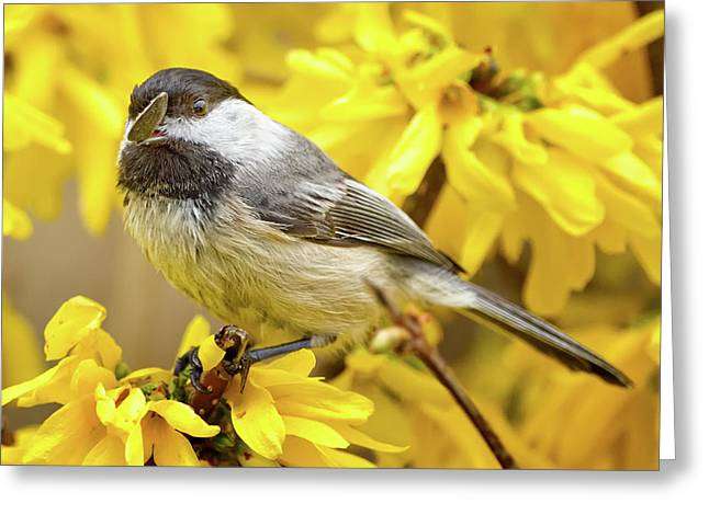 Yellow Flower Greeting Cards - Hungry Bird Greeting Card by Bill  Wakeley
