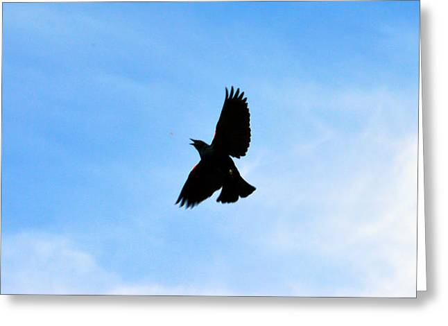 Hungry Fly Greeting Cards - Hungry Bird Greeting Card by Brent Dolliver