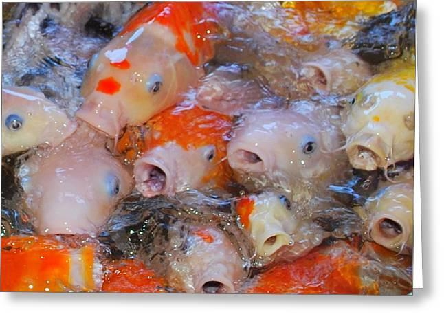 Hungry Fish Greeting Card by Tonyah Nichols