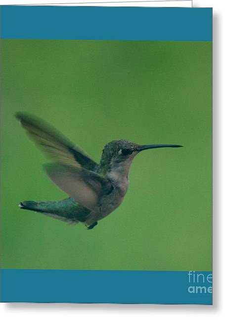 Feeder Framed Prints Greeting Cards - Hungry Little Hummingbird 4 Greeting Card by Barbara Dalton
