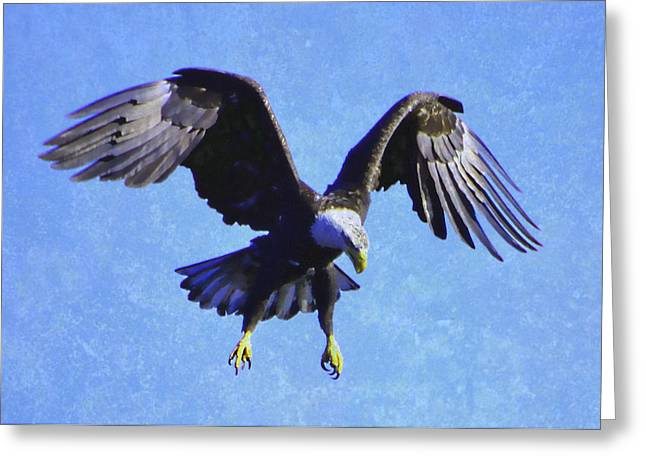 Hovering Greeting Cards - Hunt of the Bald Eagle Greeting Card by Deena Stoddard