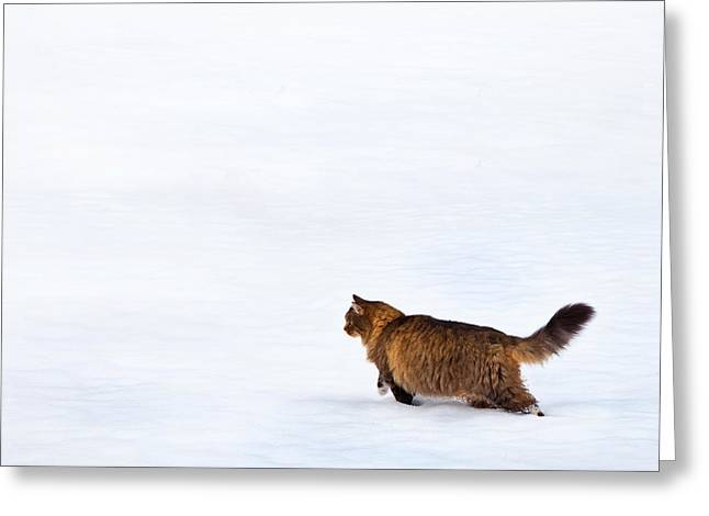 Cat Prints Photographs Greeting Cards - Hunter At Work Greeting Card by Theresa Tahara
