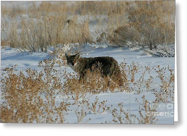 Hunter In The Snow Greeting Card by Marty Fancy