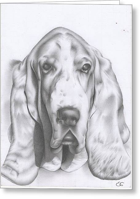 Basset Drawings Greeting Cards - Hunter the Basset Hound Greeting Card by Esther Rosier