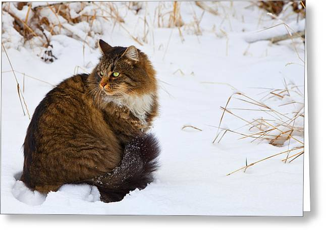 Cat Prints Photographs Greeting Cards - Hunter Greeting Card by Theresa Tahara