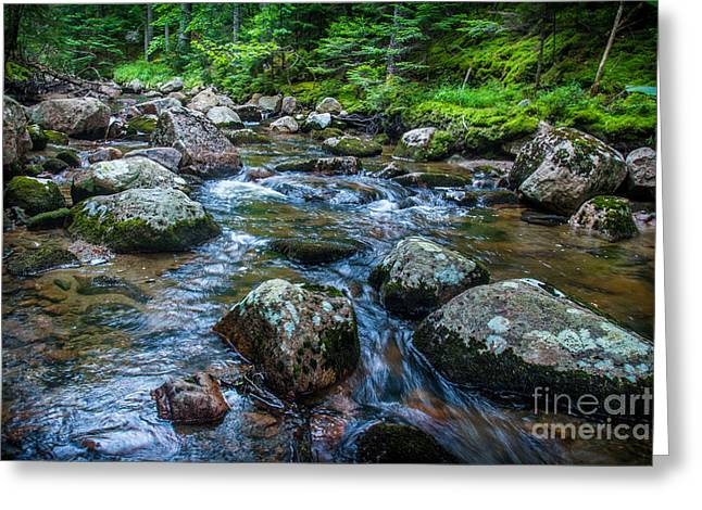 Maine Shore Greeting Cards - Hunters Brook Greeting Card by David Rucker