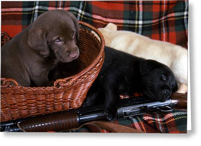 Pictures Of Dogs Greeting Cards - Hunters Puppy Dreams Greeting Card by Skip Willits