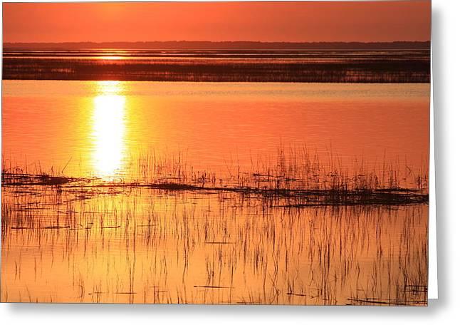 Hunting Island Tidal Marsh Greeting Card by Michael Weeks