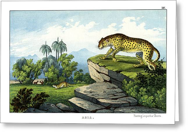 Leopard Drawings Greeting Cards - Hunting Leopard Greeting Card by Splendid Art Prints