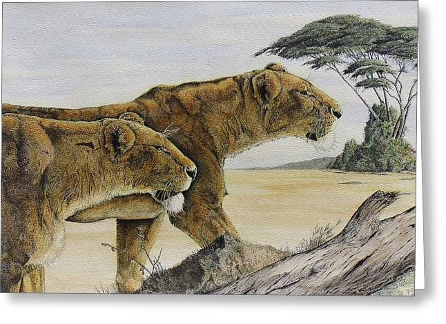Pen And Ink Framed Prints Greeting Cards - Hunting Lions Greeting Card by Charles Berry