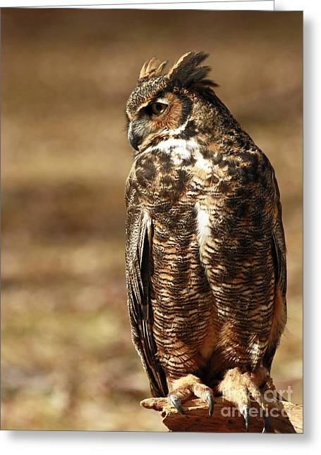 Shelley Myke Greeting Cards - Hunting Solo - Great Horned Owl Greeting Card by Inspired Nature Photography By Shelley Myke
