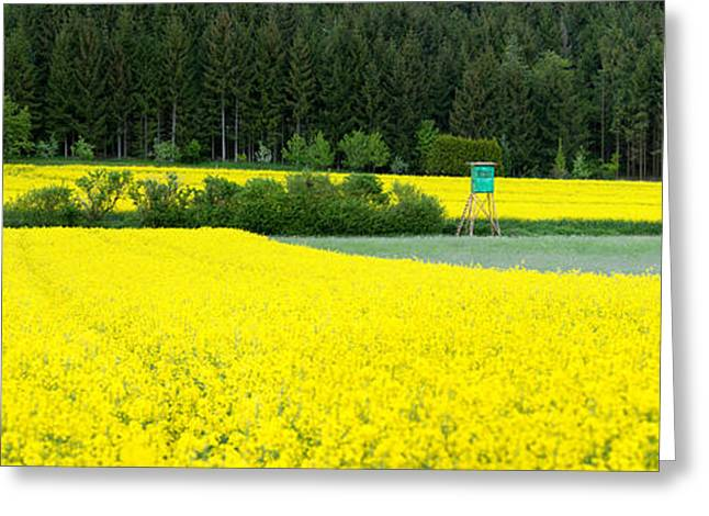 Surveillance Greeting Cards - Hunting Stand In Blooming Rapeseed Greeting Card by Panoramic Images