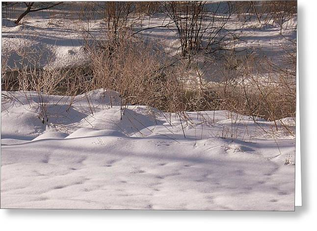 New England Snow Scene Greeting Cards - Hunting The Waters Edge Greeting Card by Eunice Miller