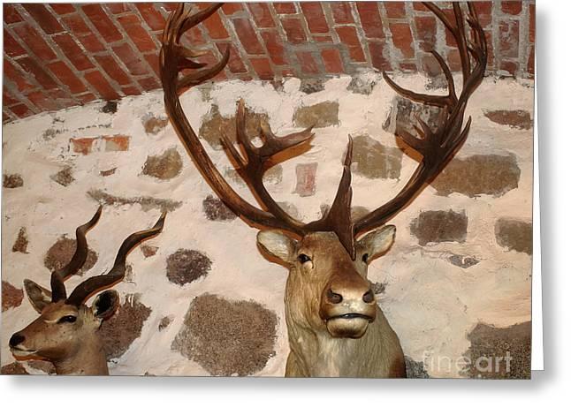 Hunting Trophys Greeting Card by Rudi Prott