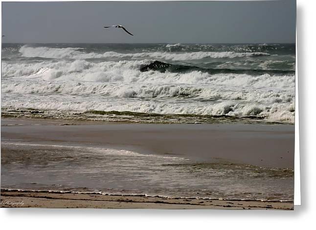 Panama City Beach Greeting Cards - Hurricane Isaac Greeting Card by Debra Forand