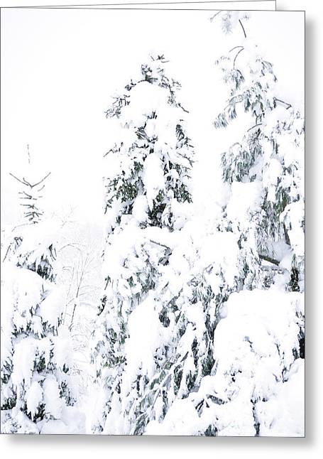 Virginia Snow Greeting Cards - Hurricane Sandy Snow Greeting Card by Thomas R Fletcher