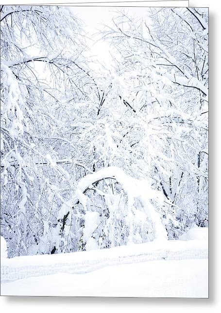 Virginia Snow Greeting Cards - Hurricane Snow  Greeting Card by Thomas R Fletcher