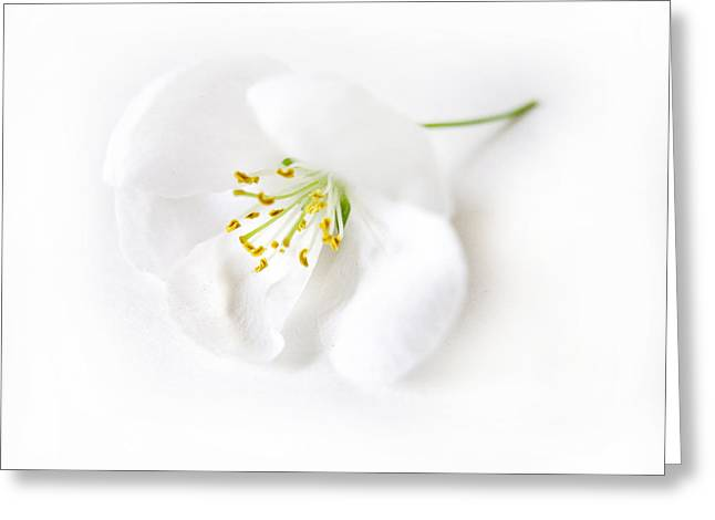 Flower Blossom Greeting Cards - Hush Greeting Card by Jessica Jenney