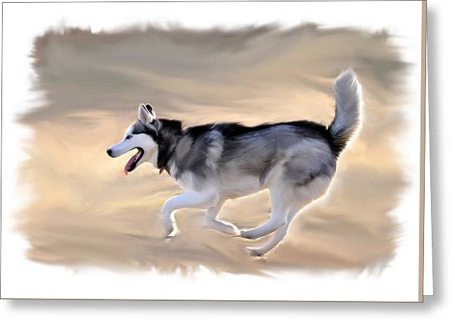 Sled Dog Greeting Cards - Siberian Husky at Play Greeting Card by Kevin Pate