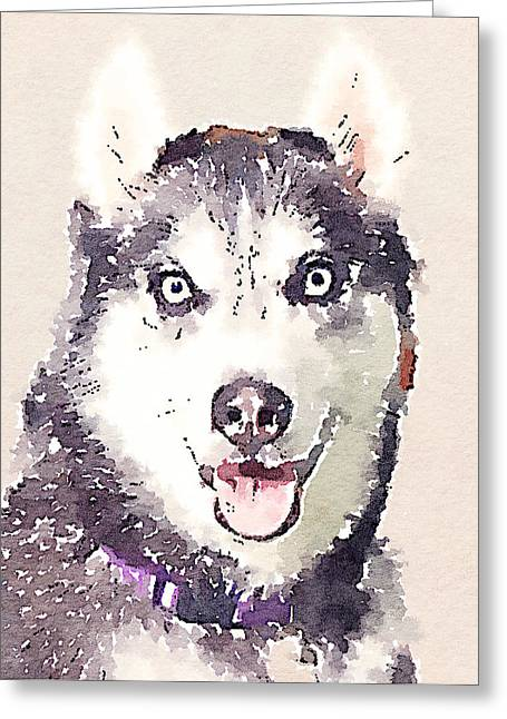 Husky Dog Greeting Cards - Husky Dog 1 Greeting Card by Yury Malkov