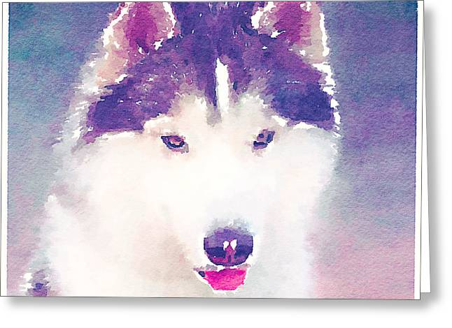 Husky Greeting Cards - Husky Dog 2 Greeting Card by Yury Malkov