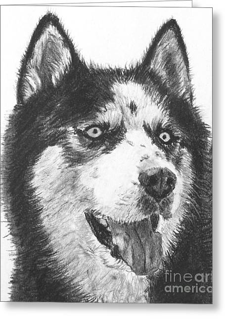 Husky Drawings Greeting Cards - Husky Drawing Greeting Card by Kate Sumners