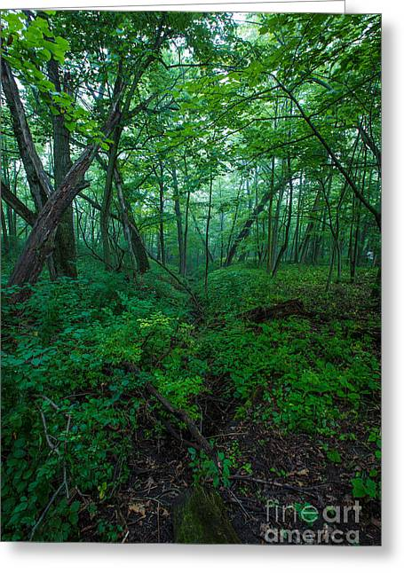 Nature Center Greeting Cards - Huth Ravine Greeting Card by Andrew Slater