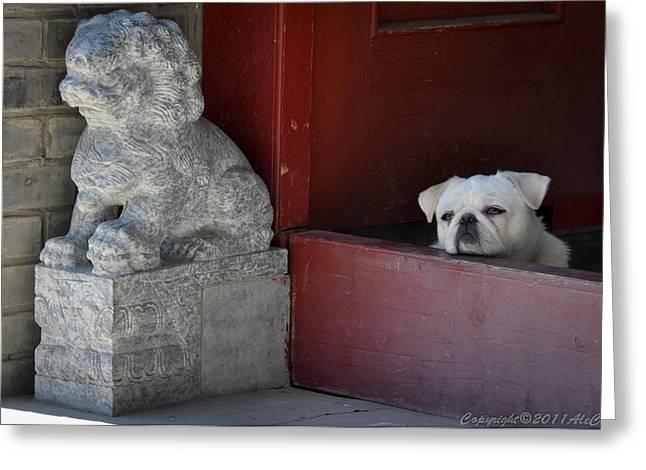 Hutong Greeting Cards - Hutong dog Greeting Card by Alejandro Cupi