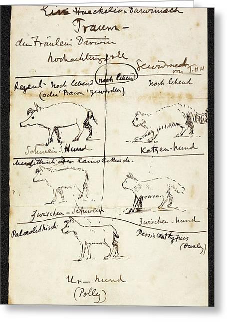Huxley On Charles Darwin's Dog Greeting Card by British Library