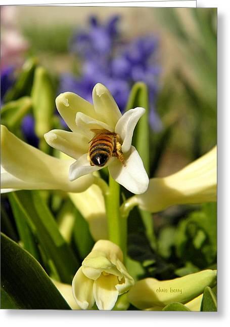 Black Berries Greeting Cards - Hyacinth and Honeybee Greeting Card by Chris Berry