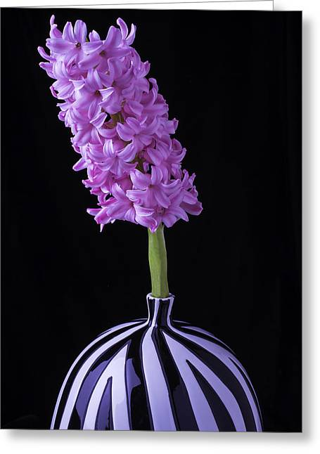 Hyacinth Greeting Cards - Hyacinth In Striped Vase Greeting Card by Garry Gay