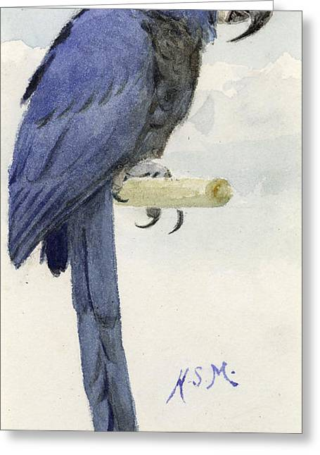 Wild Parrots Greeting Cards - Hyacinth Macaw Greeting Card by Henry Stacey Marks