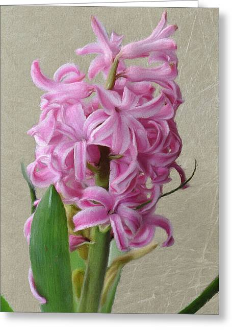 Hyacinth Greeting Cards - Hyacinth Pink Greeting Card by Jeff Kolker