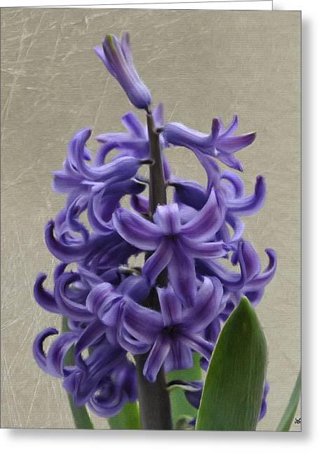 Hyacinth Greeting Cards - Hyacinth Purple Greeting Card by Jeff Kolker