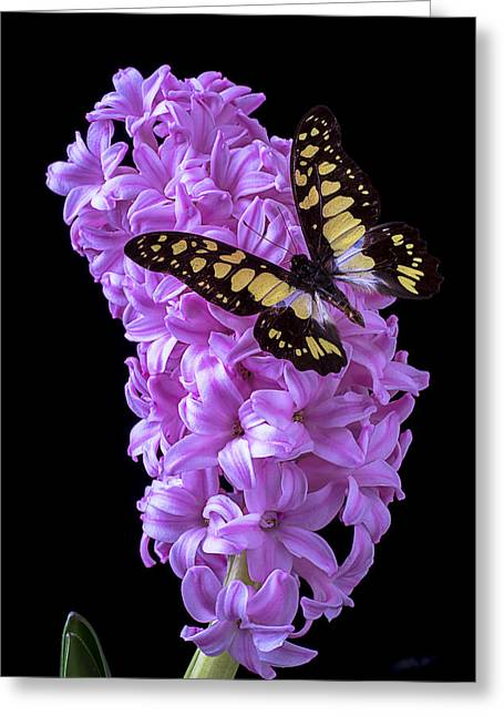 Hyacinth Greeting Cards - Hyacinth with butterfly Greeting Card by Garry Gay