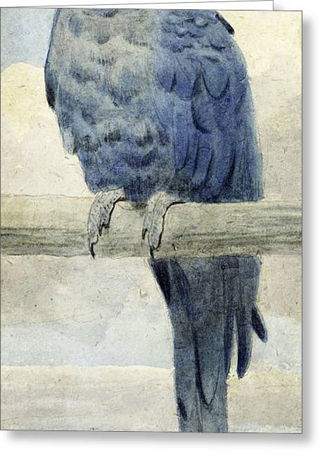 Wild Parrots Greeting Cards - Hyacinthine Macaw Greeting Card by Henry Stacey Marks