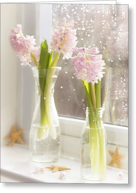 Hyacinth Greeting Cards - Hyacinths Greeting Card by Amanda And Christopher Elwell