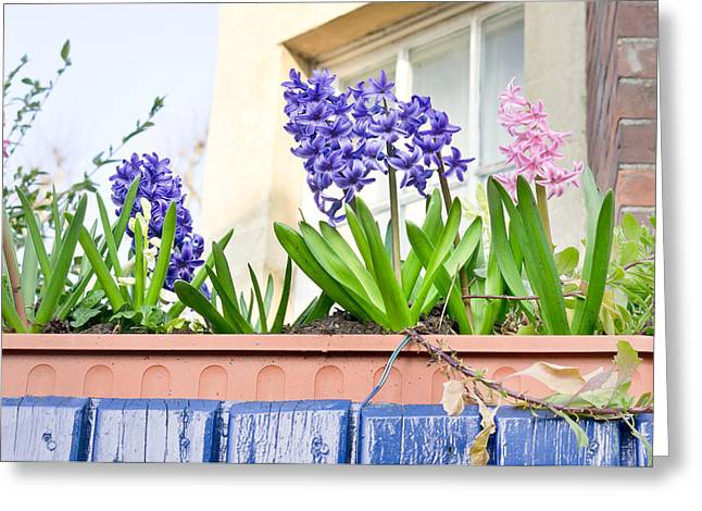 Background Greeting Cards - Hyacinths Greeting Card by Tom Gowanlock