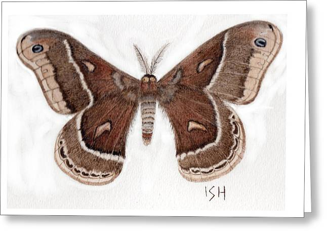 Hyalophora Cecropia/gloveri Hybrid Moth Greeting Card by Inger Hutton