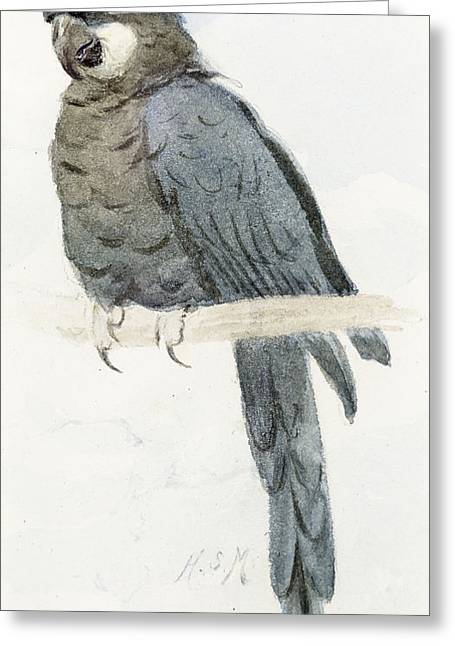 Macaw Profile Greeting Cards - Hyancinth Macaw Greeting Card by Henry Stacey Marks