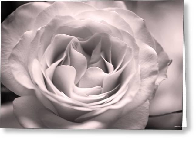 Hybrid Tea Rose In Dusty Mauve Greeting Card by Connie Fox