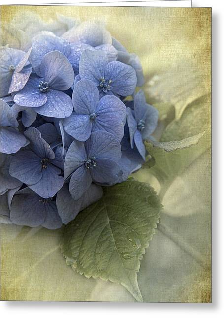 Enhanced Greeting Cards - Hydrangea 2 Greeting Card by Angie Vogel