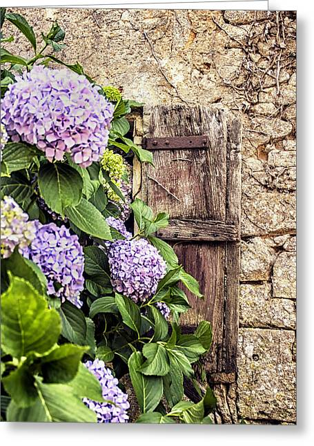 Overgrown Greeting Cards - Hydrangea and an Old Window Shutter Greeting Card by Nomad Art And  Design