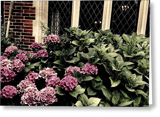 Hydrangea Blossoms Greeting Card by Nicole Parks