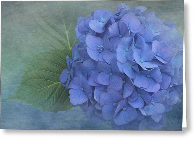 Blue And Green Greeting Cards - Hydrangea Blues 2 Greeting Card by Angie Vogel