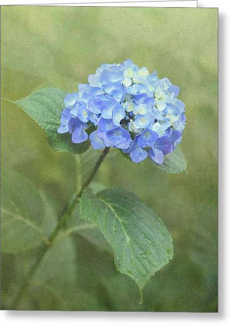 Texture Flower Greeting Cards - Hydrangea Blues Greeting Card by Angie Vogel
