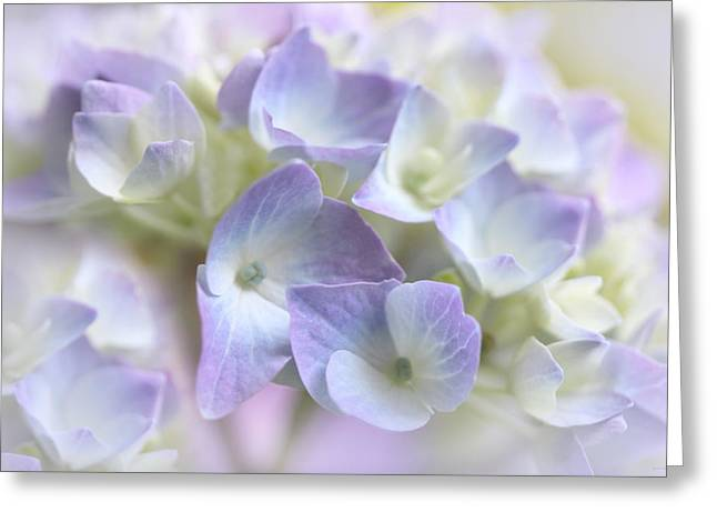 Purple Hydrangeas Greeting Cards - Hydrangea Floral Macro Greeting Card by Jennie Marie Schell