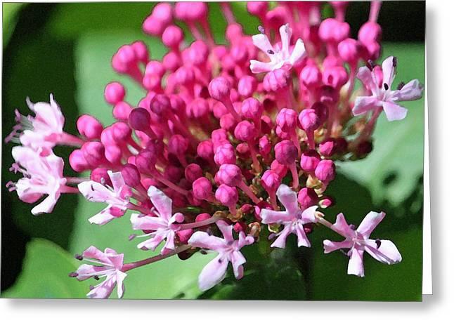 Floral Digital Art Greeting Cards - Hydrangea Heaven II Greeting Card by Suzanne Gaff
